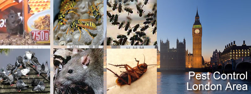 pest control london east ham stratford Docklands barking