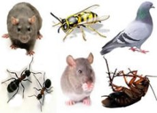 pest control information pest profiles and frequently asked questions
