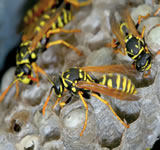 low cost wasp nest removal in London